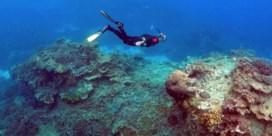 Australië luidt noodklok over Great Barrier Reef