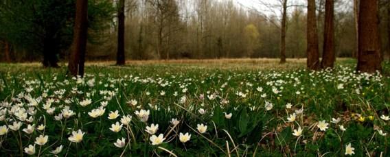 Natuurpunt kapt negen hectare bos (om andere bomen te kunnen planten)