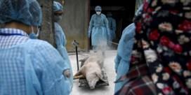 China drijft ook Belgische varkensprijs op