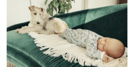 Is het nog verantwoord om huisdieren te houden?