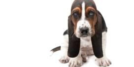 Hond sluit zichzelf op in de lift