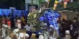 Olifant slaat op hol in drukke straat tijdens festival