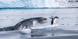 Deze dierenfoto's maken dit jaar kans op prestigieuze fotoprijs