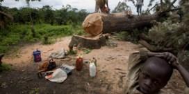 Wereld moet boskap halveren, maar hakt steeds sneller