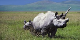 Op safari in Tanzania: eindelijk, vijf op vijf!