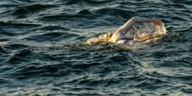 Amerikaanse vrouw die borstkanker overwon zwemt vier keer na elkaar Kanaal over