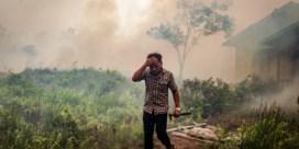 De president is geen Bolsonaro, maar dat stopt het vuur niet