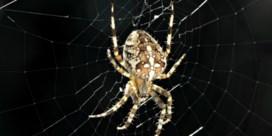 Spin gaat kleiner wonen in de stad