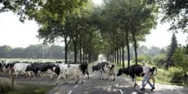 Minder stikstof door minder koeien en minder wegverkeer