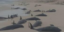134 dode witlipdolfijnen aangespoeld op Kaapverdië
