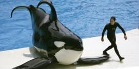 Tripadvisor verkoopt geen tickets meer voor attracties met walvissen