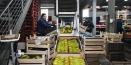 Omzet Vlaamse fruitsector zakt met twaalf procent
