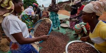 Zo helpen Belgische landbouwers vrouwelijke cacaoboeren in Afrika
