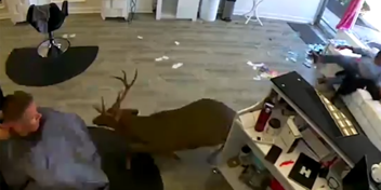 Hert springt kapsalon binnen en neemt stijltang mee