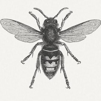 De melancholie van de hoornaar
