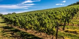 Warmer klimaat zet Franse wijntraditie onder druk