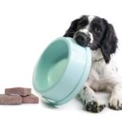 Trendy rauw hondenvoer met bacteriën besmet