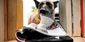 Hond bijt data