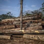 Gewetensbezwaren tegen de kap van bomen
