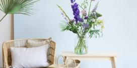 Bloemenleverancier Bloomon test verkoop bij Albert Heijn