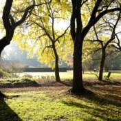 Wie rechten geeft aan bomen, maakt denkfout