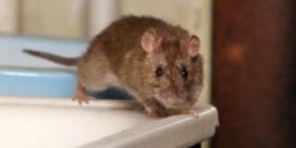 Hoe pak je muizen of ratten aan zonder je kinderen in gevaar te brengen?