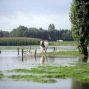 Ook Vlaanderen heeft een stikstofprobleem