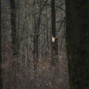 Natuur en Bos neemt gas terug met kappingen