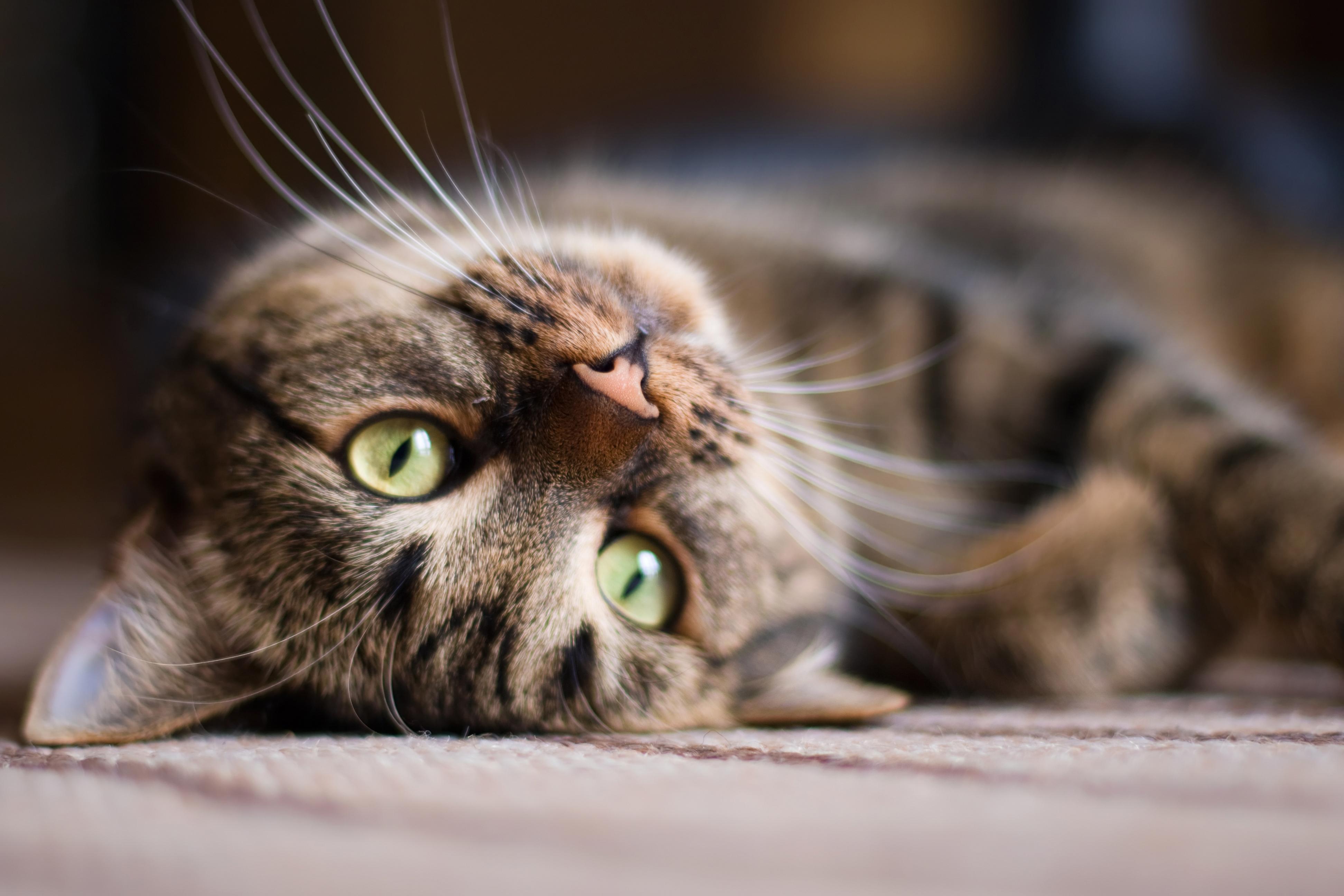 Zodra je katten in huis neemt, gebeurt er iets onmogelijks