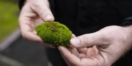 'Een dak dat groen uitslaat van het mos, is enorm waardevol'