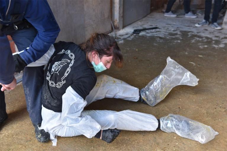 Animal Resistance reageert op kritiek na actie bij foie gras-producent: 'De mortaliteit ligt sowieso hoog'
