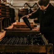 Eerste oogst in 2018, nu is jonge Belg al beste Franse wijnbouwer