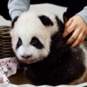 Pandatweeling krijgt naam