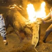 Horens van stier in brand gestoken bij controversieel festival