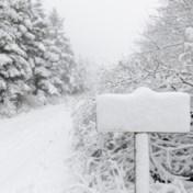 Daar is de winter al: eerste dikke sneeuwtapijt in Hoge Venen