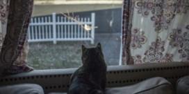 'Katten binnenhouden om vogels te redden is onnodig. De meeste zijn geen geweldige jagers'