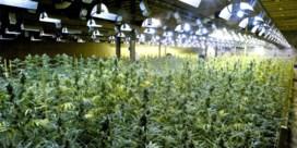Grote drugsactie in Antwerpen: 15 aanhoudingen, 11 cannabisplantages ontdekt