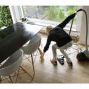 Huishoudhulpen strijken neer in Brussel
