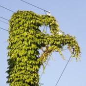 '90 procent van Vlaamse groene energie helpt de vergroening niet vooruit'