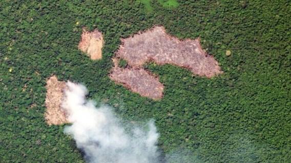 Amazonewoud verliest meer dan 10.000 vierkante kilometer in jaar tijd