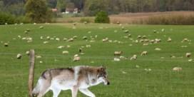 Het sprookje van de grimmige wolf