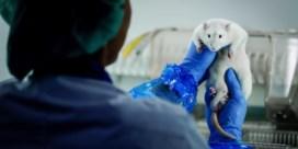 'Voortaan leggen we zelf uit waarom we dierproeven uitvoeren'