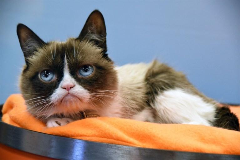 Wereldberoemde internetkat Lil Bub overleden