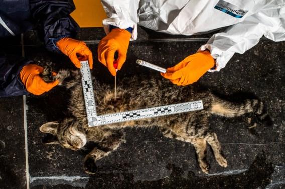 Jagen op dierenbeulen in CSI-stijl