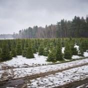 Kerstboomkwekers in de clinch met Ikea