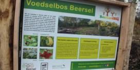 Fruit en kruidenplukken in voedselbos