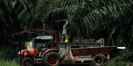 Palmolie boomt door biodiesel en varkenspest