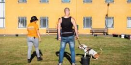 Gedetineerden trainen volgend jaar 'lastige' asielhonden