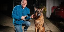 Steeds meer herdershonden in dierenasielen