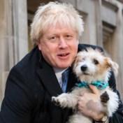 LIVE. Stembussen zijn gesloten: exit polls voorspellen winst voor Johnson